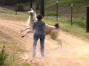 jumpingaround1